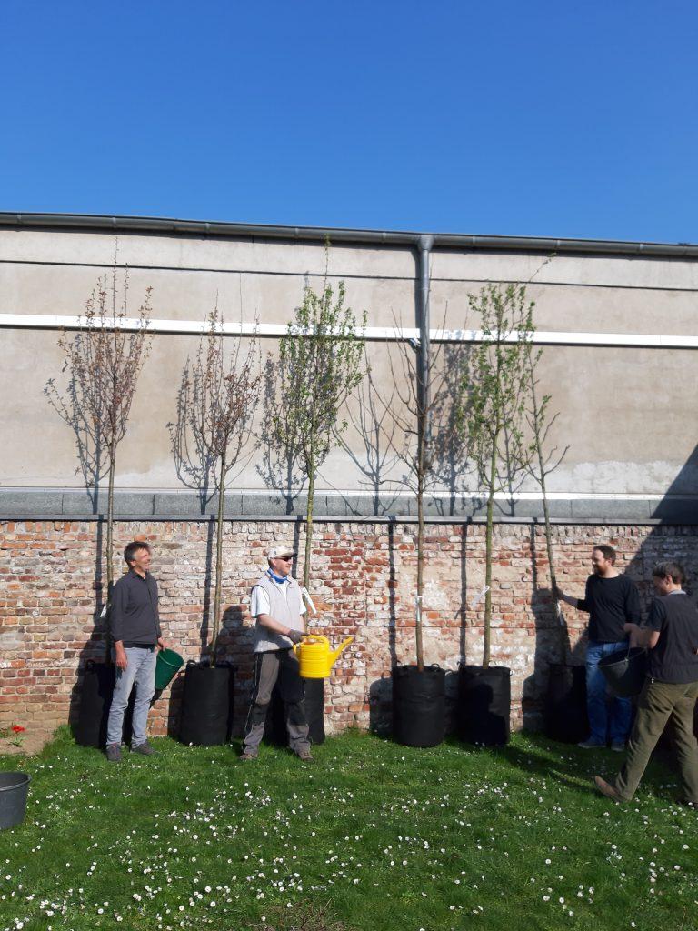 Sechs Bäume in Pflanzsäcken stehen auf einer grünen Wiese vor einer Mauer. Vor den bäumen stehen Personen mit Gießkannen.