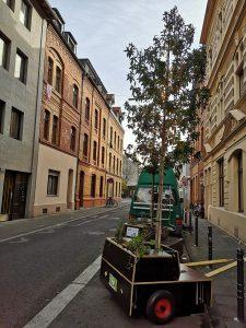 Bäume in der Marienstraße